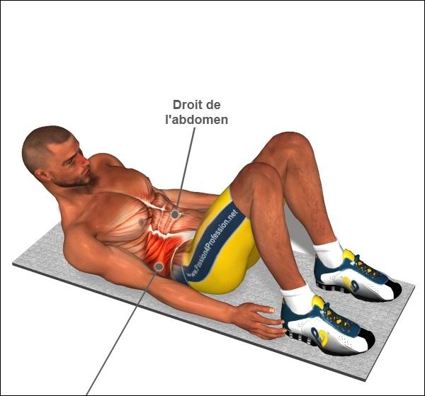 Comment les muscles abdominaux situés sur les flancs de l'abdomen sont-ils nommés ?