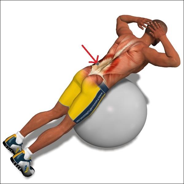 Quel ensemble musculaire cet homme est-il en train de renforcer ?