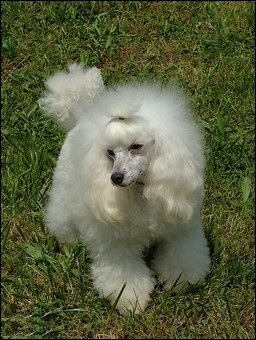 Quelle est la race de ce chien ?