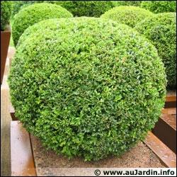 quizz fleurs et plantes vrai ou faux 2 quiz fleurs plantes. Black Bedroom Furniture Sets. Home Design Ideas