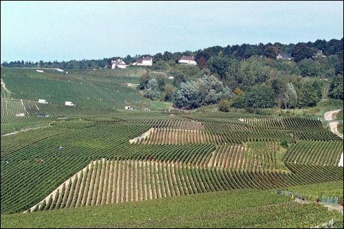 A présent, faisons une balade sur la Montagne de Reims, où grâce aux vignes est produit le ...