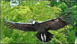 Quizz animaux le plus grand quiz animaux oiseaux - Quel est le plus grand port d afrique ...