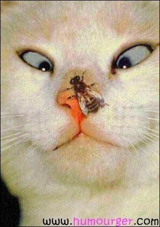 Comment reconnaît-on qu'une mouche est une femelle ?