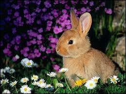 Comment dit-on ce joli petit animal en anglais ?