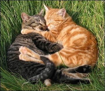 Que font principalement les chats pendant leur journée ?
