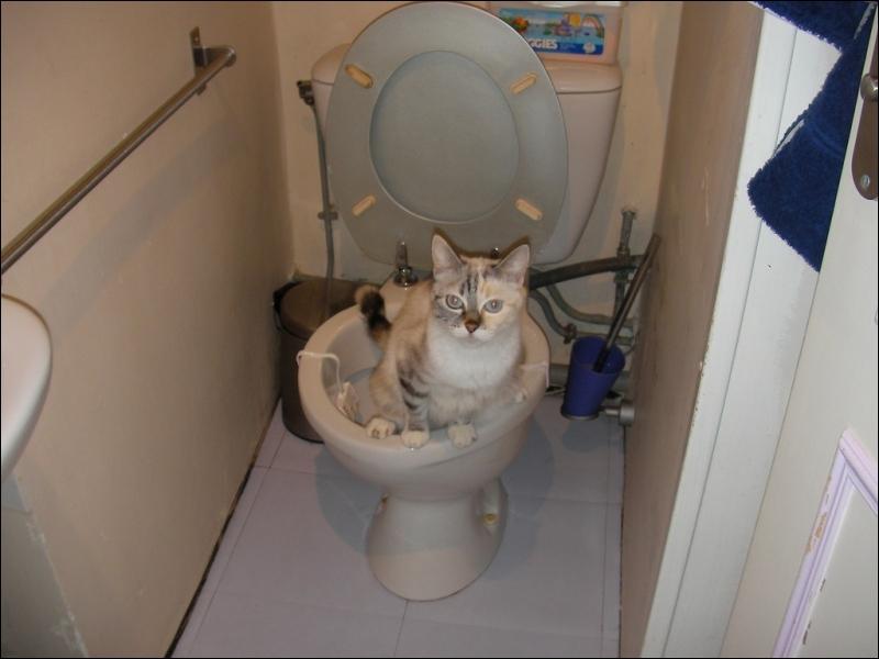 Que fait le chat pour marquer son territoire ?