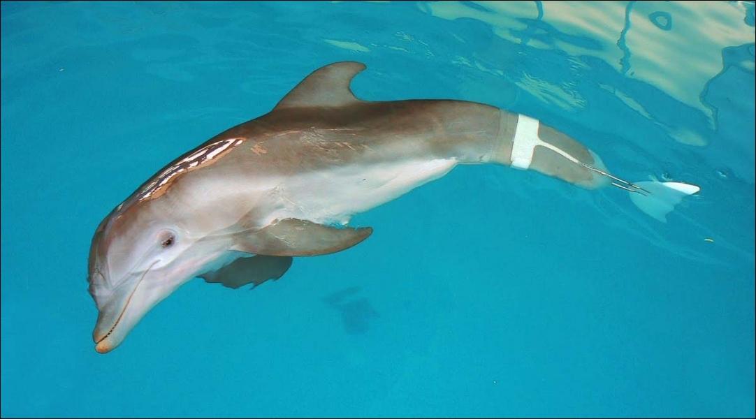 Comment s'appelle le dauphin ?