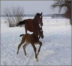En hiver, que faut-il surveiller quand les chevaux sont au pré ?