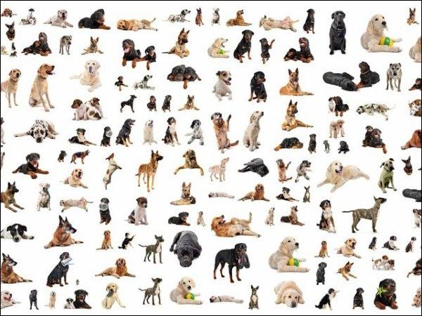 quizz es tu un connaisseur sur les chiens quiz chiens. Black Bedroom Furniture Sets. Home Design Ideas