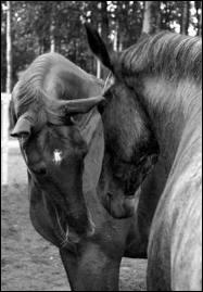 Comment sont les hennissements de chevaux qui ne s'aiment pas ?