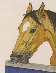 Par quel phénomène un cheval a-t-il un tic ?