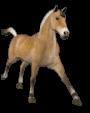 Pourquoi ne faut-il pas donner du pain mou aux chevaux ?