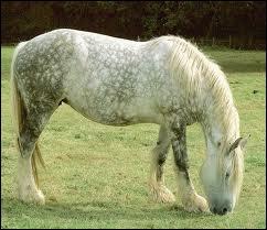Les chevaux ruminent-ils ?