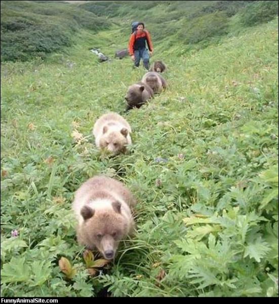 Parlons maintenant du grizzli, il est ...