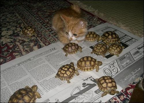 La tortue terrestre est ...