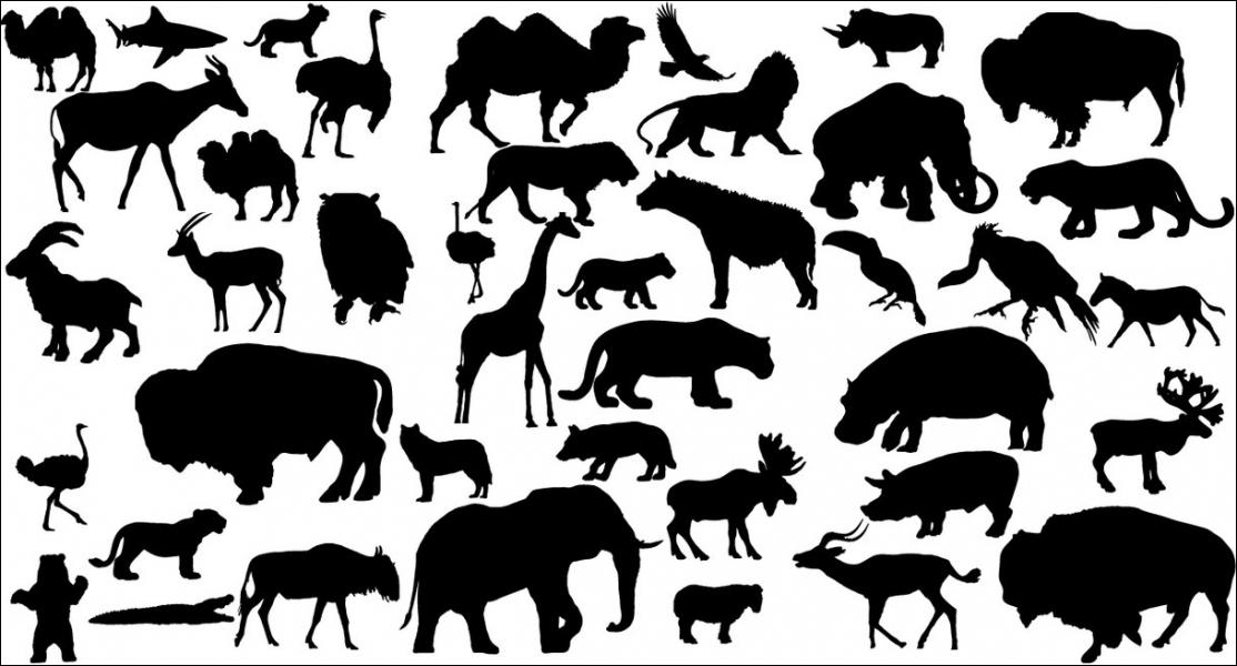 L'animal représenté par la silhouette, située en haut à droite, est ...