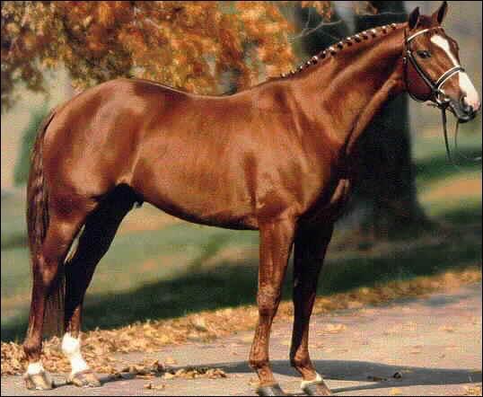 Quelle est la race de cheval ?