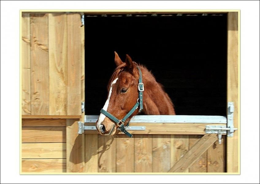 Où peut-on loger le cheval ?