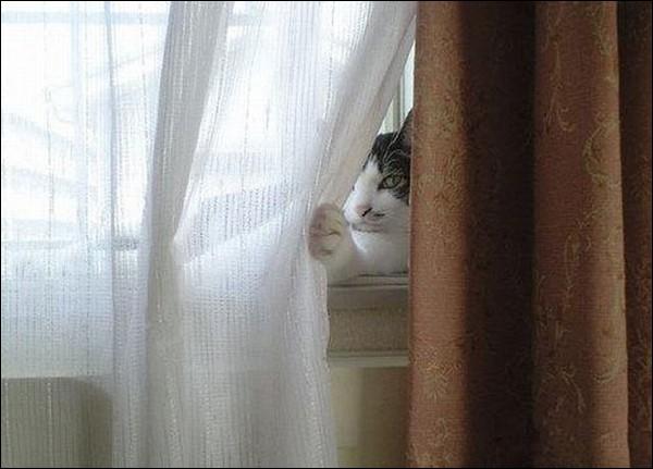 Qui vous regarde discrètement ?