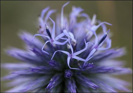 Cette image a été une de vos préférées du Défi Images  flore méditerranéenne . De quelle plante s'agit-il ?