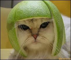 Quand il est cloche, il ne sonne pas. Quand il est melon, on ne le mange pas.