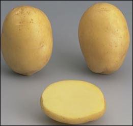 Comment s'appelle cette pomme de terre ?