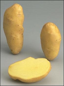 Cette pomme de terre s'appelle ...