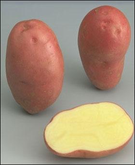Cette pomme de terre rose-violet s'appelle . .