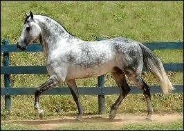 A quelle robe appartient ce cheval ?