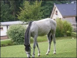 Et celle de ce cheval ?