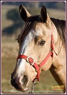 Et la race de ce cheval qui joue dans Grand Galop ?