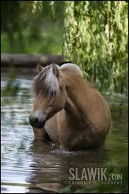 Et celle de celui-ci, mon poney préféré ?