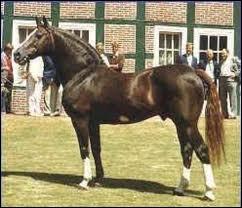 Quelle est la race de ce cheval ?