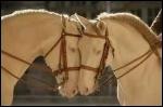 Et la robe de ces deux chevaux ?