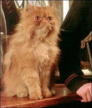 Comment se nomme son chat de compagnie ?