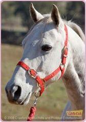 Grand Galop - Les chevaux