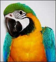 Cet oiseau est un Ara nous pouvons l'observer en Asie.