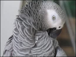 Cet animal a une particularité, celle de refaire tout ce qu'il voit.