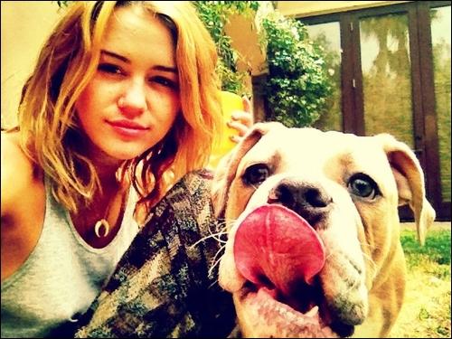 Miley possède 7 chiens.