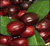 Il s'appelle  pomme-canaque  en Nouvelle-Calédonie.