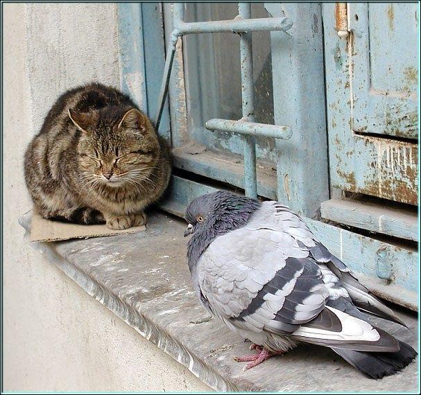 Quel mot ou expression vous inspire cette photo ? Notez que le chat est endormi !