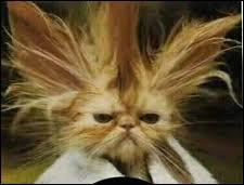 Ce chat fait penser à un personnage, mais de quel film ?