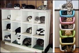 Ces chats font penser à un film, lequel ?