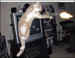 Ce chat peut remplacer Keanu Reeves. Dans quel film ?