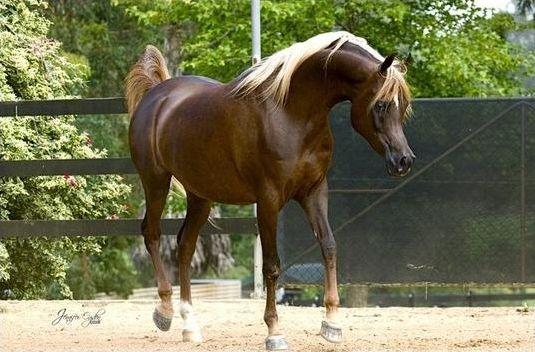 Les robes de chevaux et de poneys