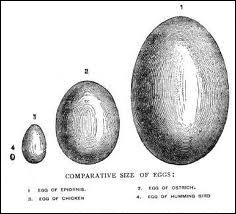 Le prix d'une douzaine d'œufs est de trois francs. Quel est le prix de dix œufs ?