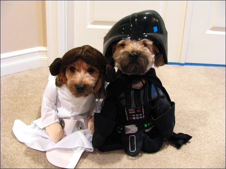 Deux parodies de Stars Wars, une princesse et un ex-jedi !