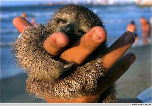 Si vous n'avez que deux doigts, comme lui, c'est ainsi que l'on vous appellera !
