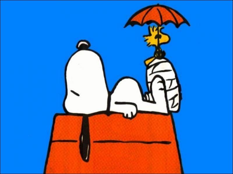 Dans les bandes-dessinés  Peanuts , Snoopy est le chien de :