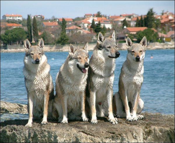 Les ressemblances ne se font pas qu'entre chiens. Réussirez-vous à répondre juste cette fois ? Ce sont des...